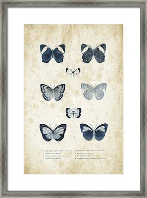 Insects - 1832 - 02 Framed Print by Aged Pixel