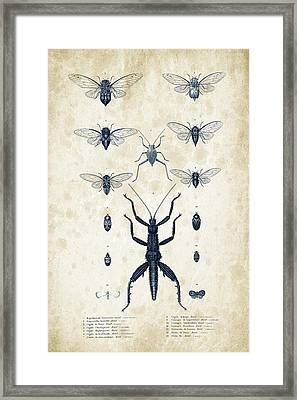 Insects - 1832 - 10 Framed Print by Aged Pixel
