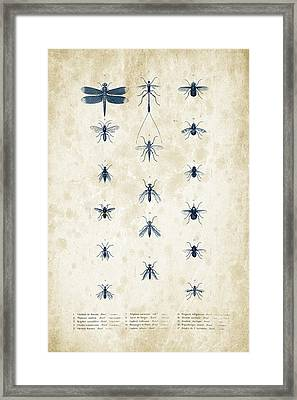 Insects - 1832 - 12 Framed Print by Aged Pixel