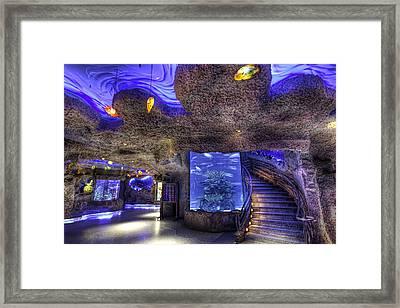 Inside The Aquarium Framed Print by Tim Stanley