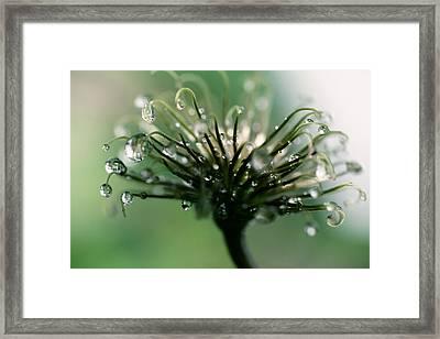 Inspiration Framed Print by Sue OConnor