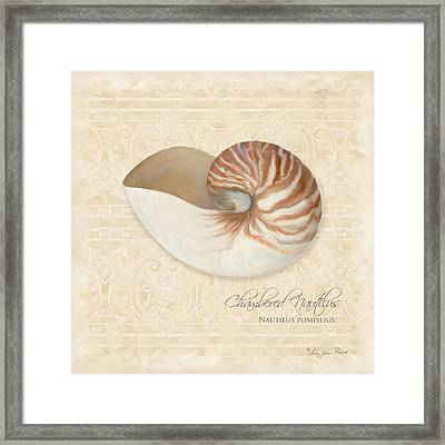 Inspired Coast Iv - Chambered Nautilus, Nautilus Pompilius Framed Print by Audrey Jeanne Roberts