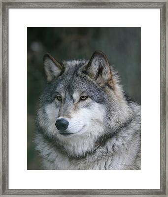 Intelligence Framed Print by Gerry Sibell