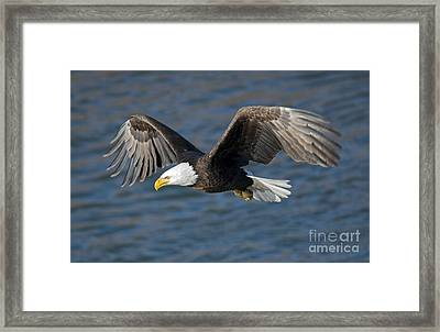 Intense Stare Framed Print by Mike Dawson