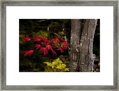 Intensity Framed Print by Chad Dutson