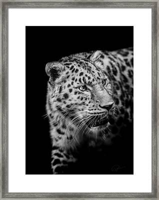 Intent Framed Print by Paul Neville