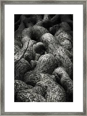 Intertwined Framed Print by Wim Lanclus