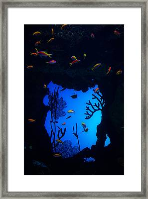 Into Another World Framed Print by Karol Livote