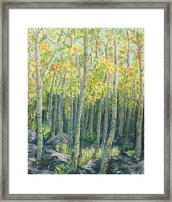 Into The Aspens Framed Print by Mary Benke