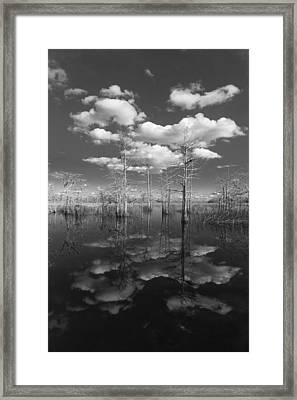 Into The Everglades Framed Print by Debra and Dave Vanderlaan
