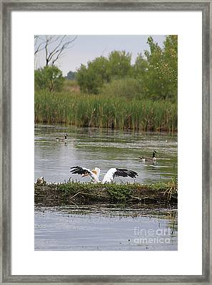 Into The Water Framed Print by Alyce Taylor