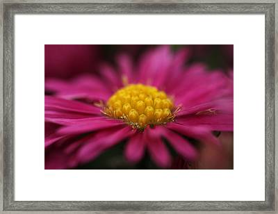 Intoxication Framed Print by Connie Handscomb