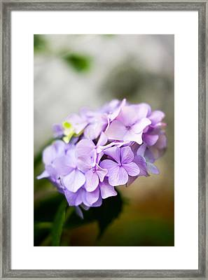 Intricate Beauty Framed Print by Shelby Young