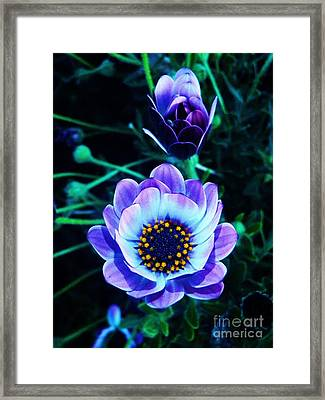 Intuition Framed Print by Daniele Smith