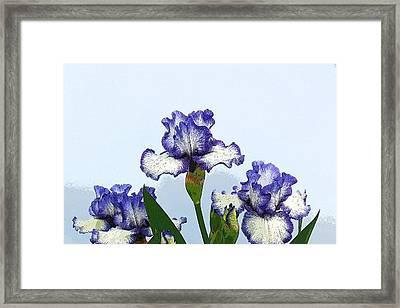 Iris 15 Framed Print by Allen Beatty