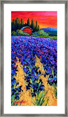 Iris Farm Framed Print by Marion Rose