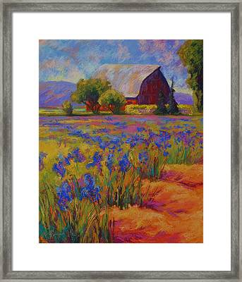 Iris Field Framed Print by Marion Rose