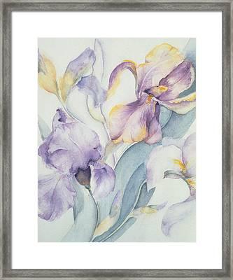 Iris Framed Print by Karen Armitage
