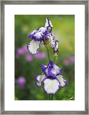Iris Loop The Loop  Framed Print by Rona Black