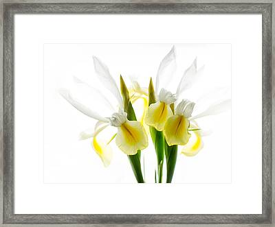 Iris Trio Black And White Framed Print by Rebecca Cozart