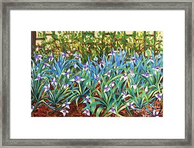 Irises Framed Print by Caroline Street