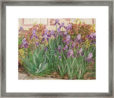 Irises Fort Smith Art Center Framed Print by Sharon  De Vore