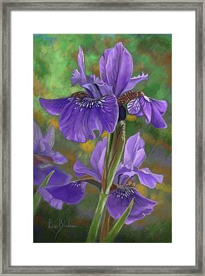 Irises Framed Print by Lucie Bilodeau