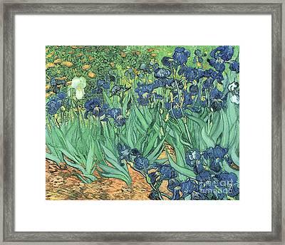 Irises Framed Print by Vincent Van Gogh