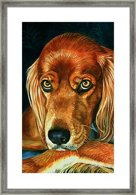 Irish Eyes - Irish Setter Framed Print by Lyn Cook