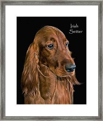Irish Setter Framed Print by Larry Linton