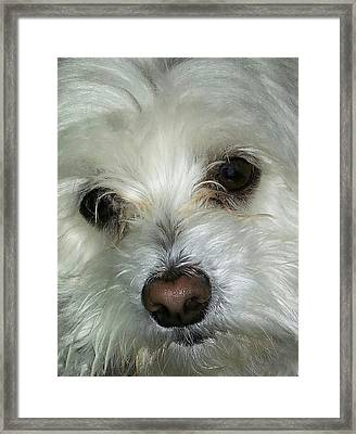 Irresistible Chloe Framed Print by Emmy Marie Vickers