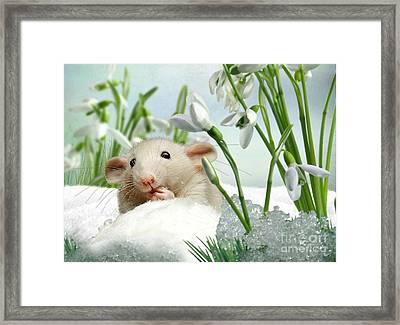 Is It Spring Yet ? Framed Print by Morag Bates