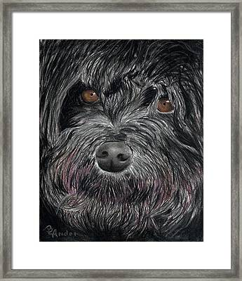 Is That A Smile Framed Print by Brent Ander