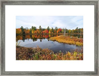 Island Brook  Framed Print by Catherine Reusch  Daley
