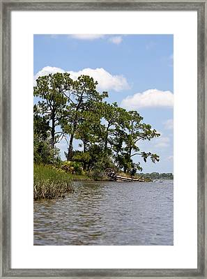 Island Pines Framed Print by Sheri McLeroy