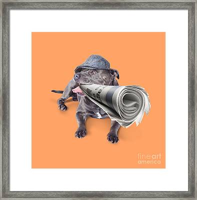 Isolated Newspaper Dog Carrying Latest News Framed Print by Jorgo Photography - Wall Art Gallery