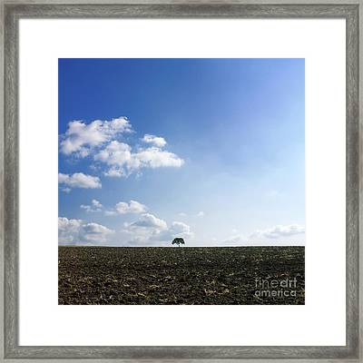 Isolated Tree Framed Print by Bernard Jaubert