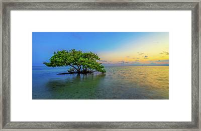 Isolation Framed Print by Chad Dutson