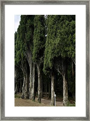 Italian Cypress Trees Line A Road Framed Print by Todd Gipstein
