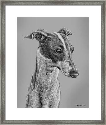 Italian Grayhound 2 Framed Print by Larry Linton
