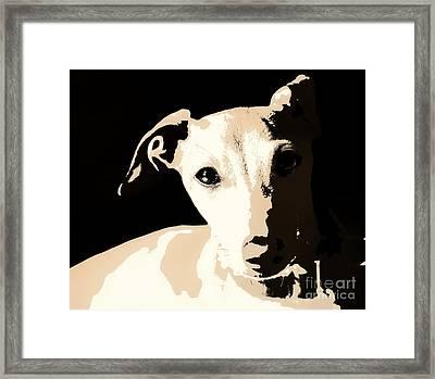 Italian Greyhound Poster Framed Print by Angela Rath