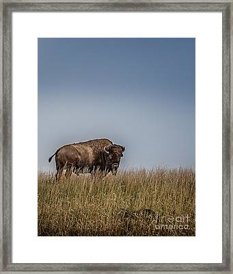 It's A Good Life Framed Print by Tamyra Ayles