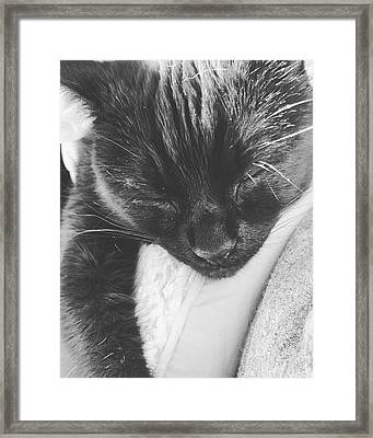 It's Been A Long Journey... Framed Print by Lucy Hillier