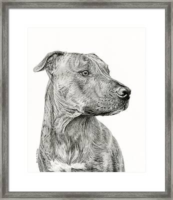 Ittie Bittie Pittie Framed Print by Sarah Batalka