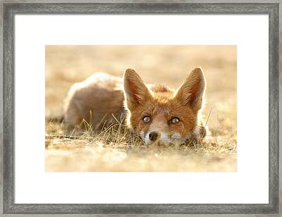 Little Fox Dreaming Of A Foxy Future Framed Print by Roeselien Raimond