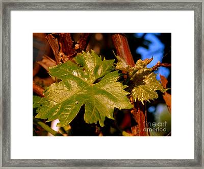 Ivy Leaf Framed Print by Michael Canning