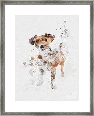 Jack Russell Terrier Framed Print by Rebecca Jenkins