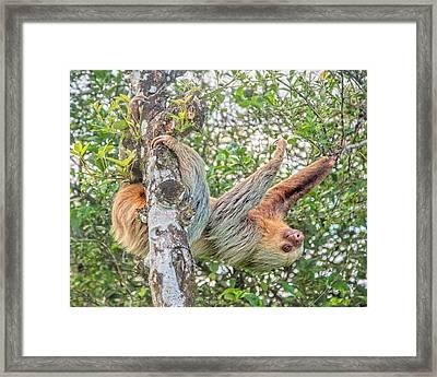 Jack Straw Framed Print by Betsy Knapp