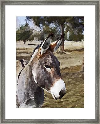 Jack Framed Print by Susie Fisher