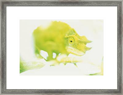 Jacksons Chameleon Color Framed Print by Carl Shaneff - Printscapes